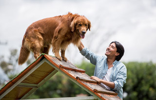Köpek nasıl eğitilir ?
