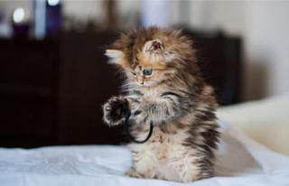 Yavru Kedi Nasıl Eğitilir ?